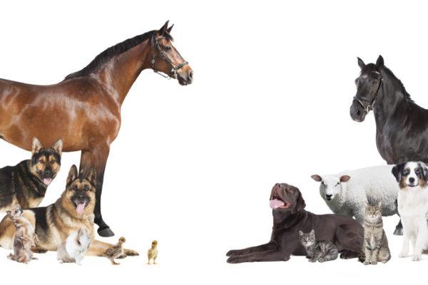 Welche Tierversicherungen brauchen Haustiere?