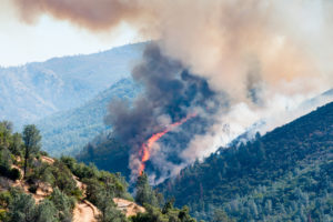 Wald ist verschiedenen Gefahren ausgesetzt